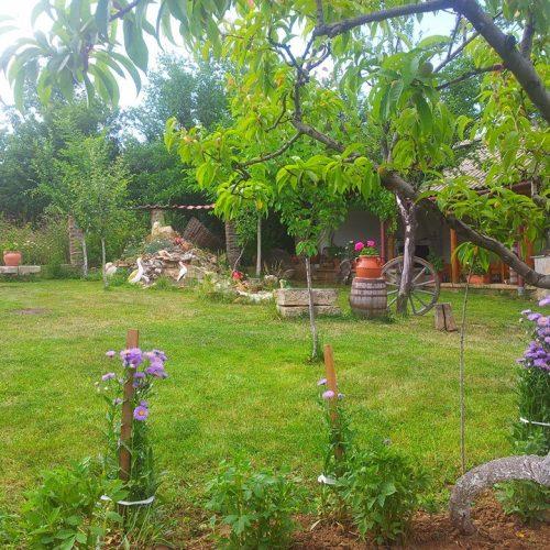 Снимки на градината